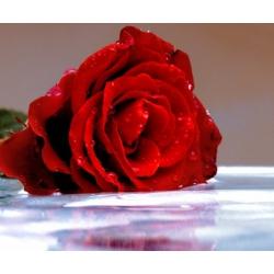 Цветочная вода Розы (органик), 50 мл,